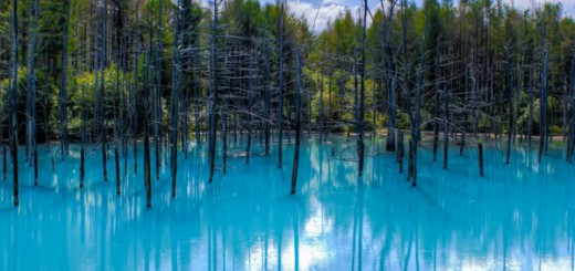 Озеро Каинды в Казахстане