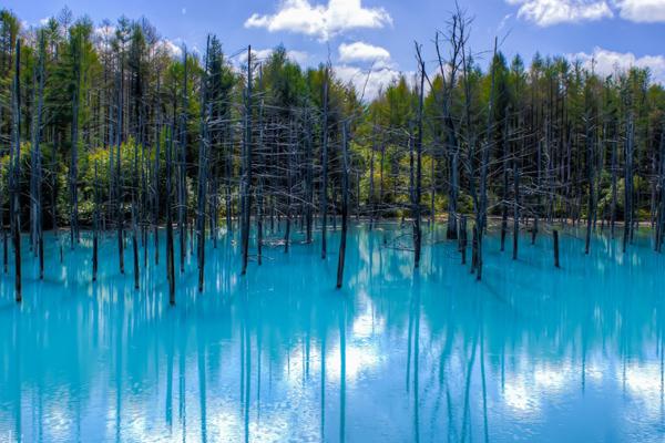 Леса затонувшие в воде
