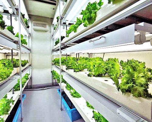 Обильный урожай наполняет лотки сборной фабрики по выращиванию растений