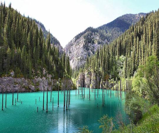 Подводный лес в озере Каинда