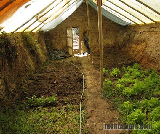 Подземная теплица валипини с урожаем круглый год