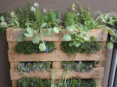 вертикальный сад из деревянных палетов