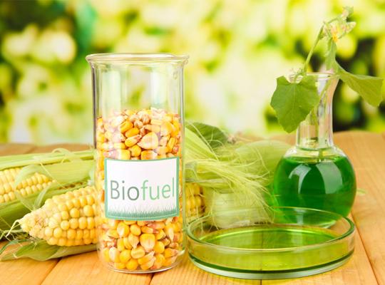 биотопливо из растений
