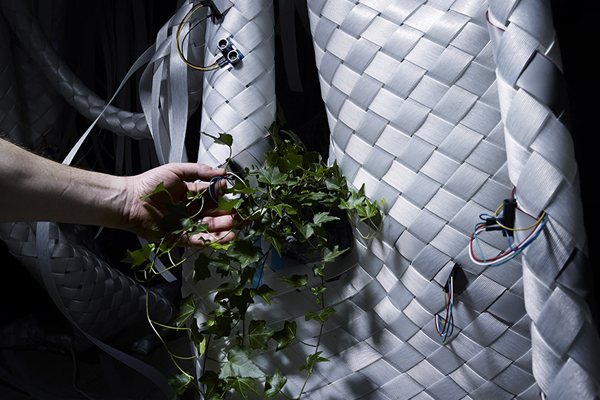 Flora Robotica – слаженный дуэт растений и роботов.