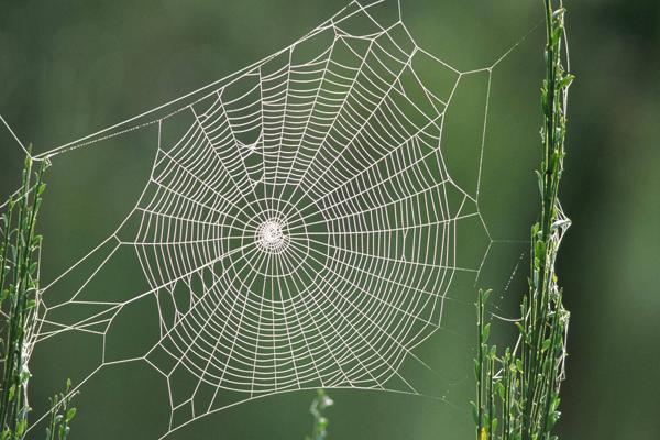 истории паучьего шелка