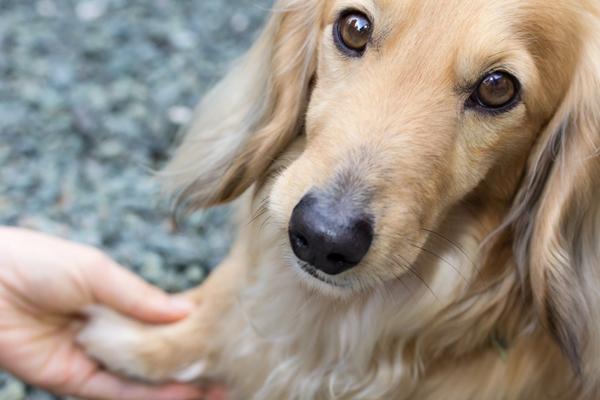 Что такое Animal Friendly ( как тестируют товары)