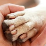 Что такое Animal Friendly