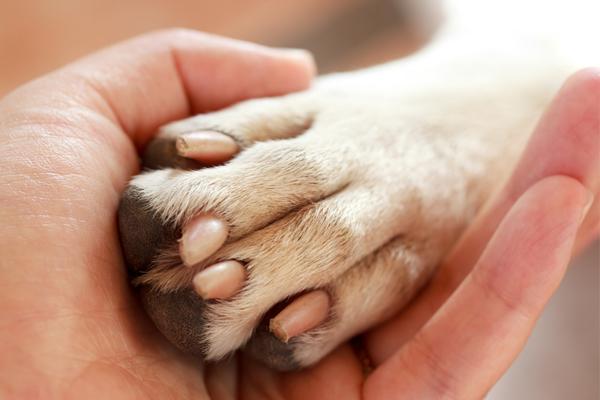 Что такое Animal Friendly (забота о животных в руках каждого человека)