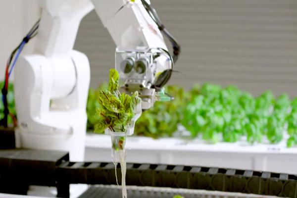 автоматизированная ферма Iron Ox