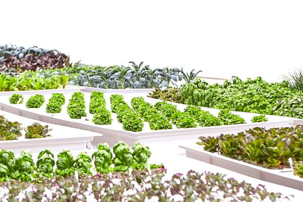 выращивание овощей роботами