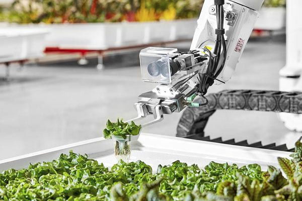 роботизированная ферма