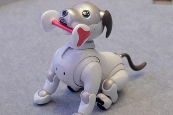 робототехника Sony AIBO