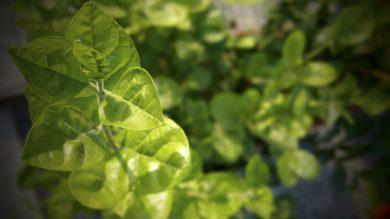 Производство экологических товаров: потребление в пользу