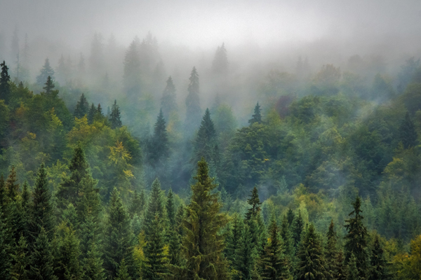 экологические проблемы - вырубка леса