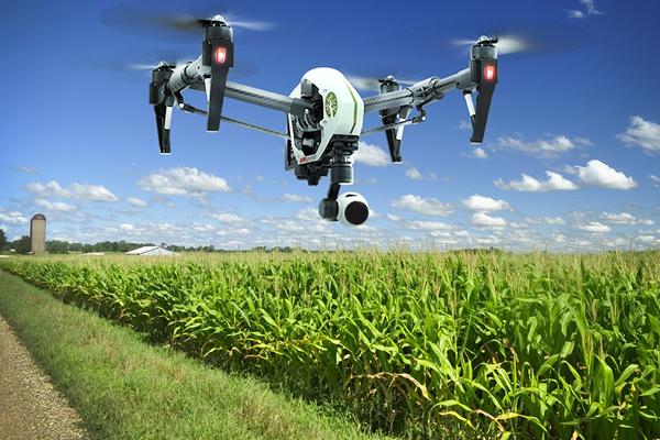 мониторинг сельскохозяйственных культур с помощью дрона