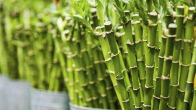 Бамбуковые трубочки: будущее без пластика