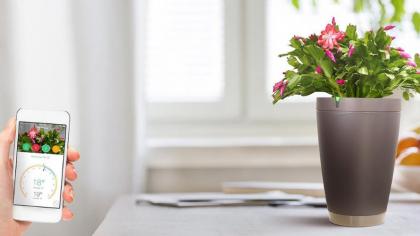 Умные горшки для цветов и других растений — ТОП 15