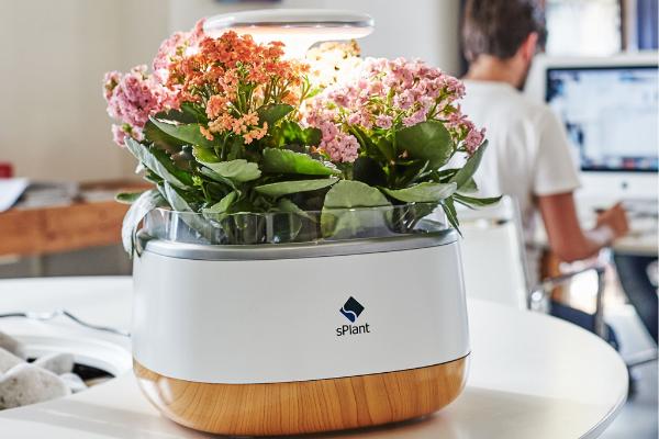 SPlant Smart Fresh Herb Garden Kit умный вазон