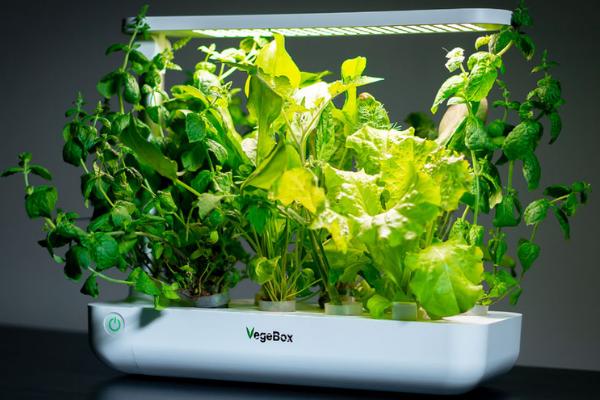 VegeBox Growing System умный горшок