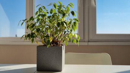Горшки с автополивом для комнатных растений